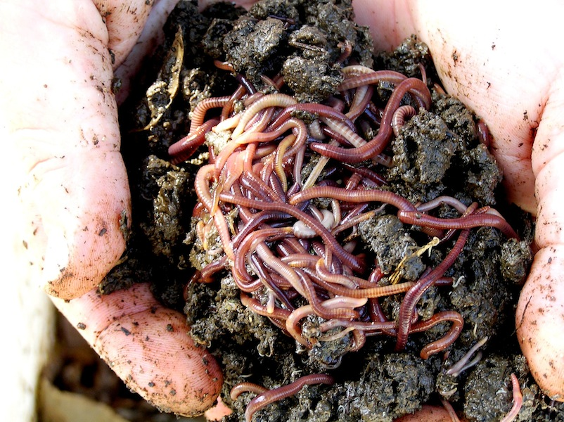 blog 1 - How to start composting: The ultimate guide